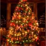 Árvore de Natal – Preço, Fotos